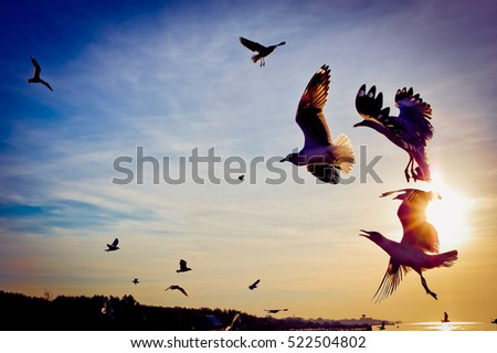 Seagulls flying at sunset