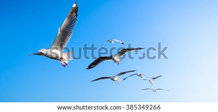 Seagulls flying by selective-focus - stock photo
