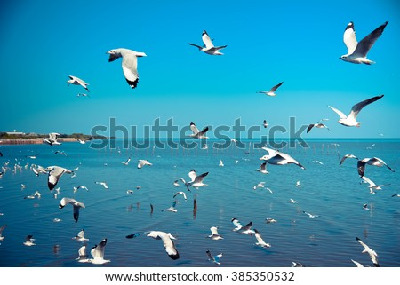 Seagulls flying by selective-focus and blue tone - stock photo
