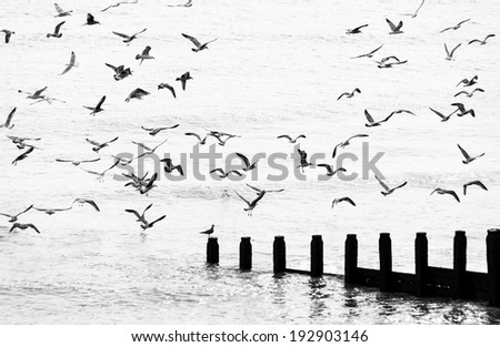 Seagulls flying in black and white - stock photo