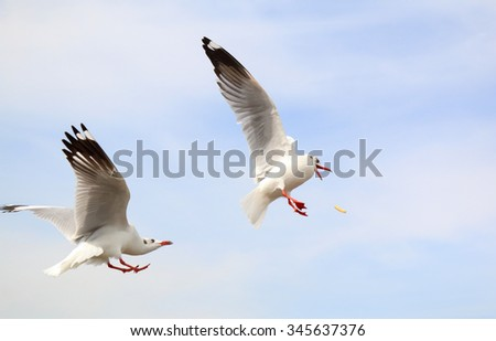 Seagulls flying in blue clear sky and bright sun