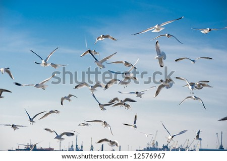 Seagulls flying in the sky over the seaport - stock photo