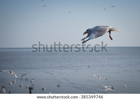 Seagulls flying landing by selective-focus - stock photo