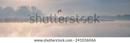 seagulls flying over river. Ultra wide panorama of misty morning river. Dniepr. Ukraine. - stock photo