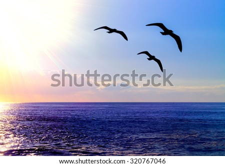 Seagulls flying over the Pacific Ocean during Sunset. - stock photo