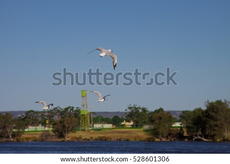 Seagulls flying over the river.