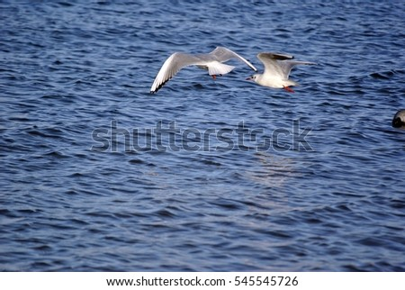 seagulls flying over the sea water