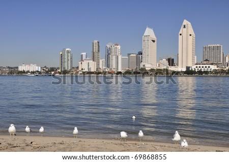 Seagulls gather on the beach on Coronado with the city of San Diego across the bay. - stock photo