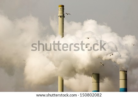 Seagulls in front of smoke originating from a large industrial plant