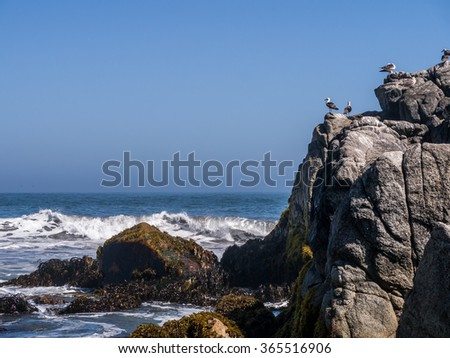 Seagulls in front of the waves of Pacific ocean, Matanzas, Chile.
