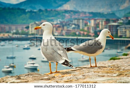 Seagulls in the city - stock photo