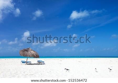 Seagulls on a beautiful Caribbean beach  - stock photo
