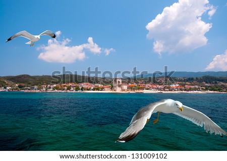 Seagulls on a way to Ouranoupolis, entry to monasteries of Mount Athos, Greece - stock photo