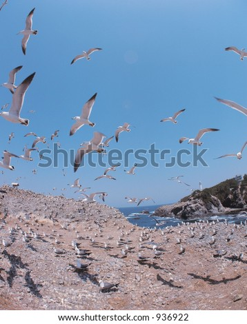Seagulls on Shore