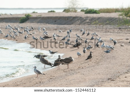 Seagulls on the sandy sea coast