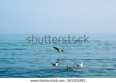 Seagulls on the sea line near the sea shore