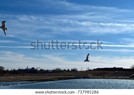 Seagulls over Lake