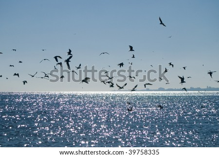 seagulls over the sea and silhouette of the city - stock photo