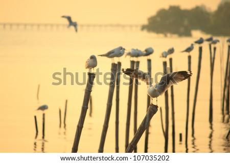 Seagulls standing on poles - stock photo