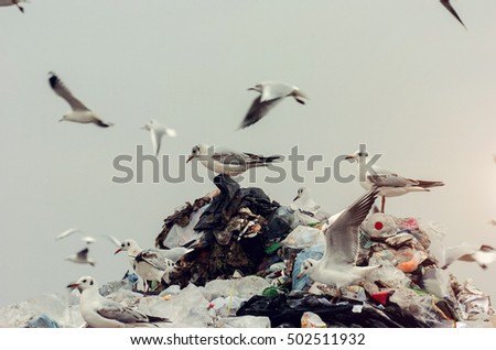 Seagulls standing on top of the landfill pile