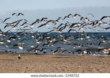 Seagulls take off from a beach