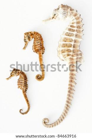 Seahorses closeup. See my portfolio for more - stock photo