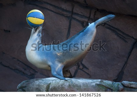 Seal balancing ball - stock photo