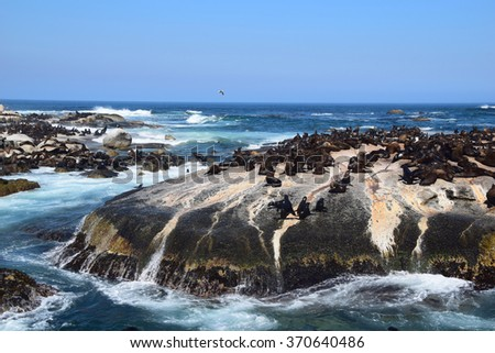 Seal Island in South Africa - stock photo