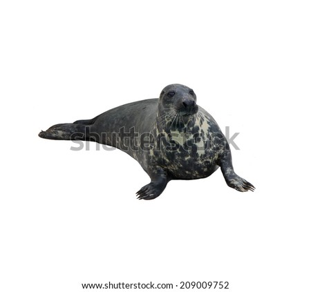 Seal on a white background