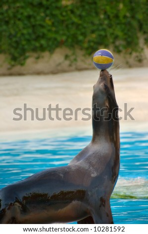 Seal playing with a ball - stock photo