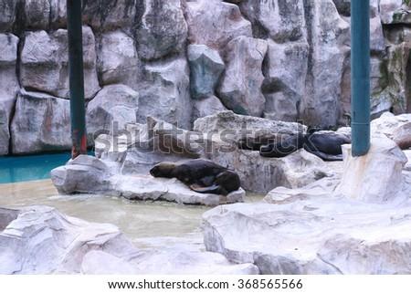 Seals - stock photo