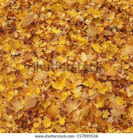seamless background of fallen autumn leaves - stock photo