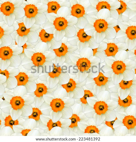 seamless background of flowers white narcissus - stock photo