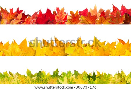 Seamless pattern of colored autumn maple leaves, isolated on white background. - stock photo