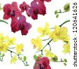 seamless pattern with orchids. watercolor - stock photo