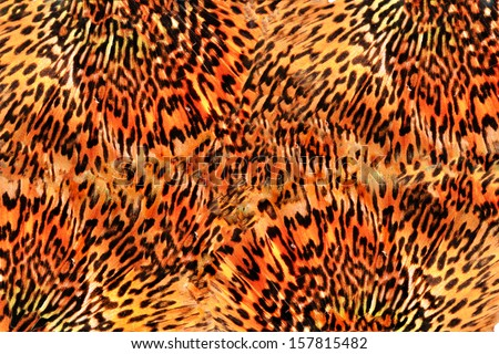 Seamless Tiger pattern background  - stock photo