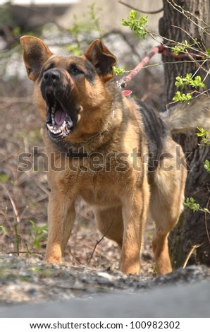 Search and Rescue German Shepherd - stock photo