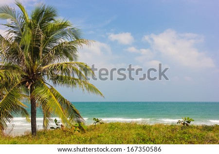 Seascape, palm at the beach,Vietnam