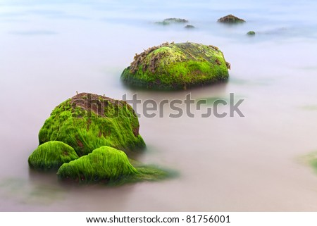 seascape seaweed on rocky shore long exposure makes smooth sea surface green paradise island on beach Ireland dream destination