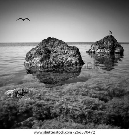 Seascape with a albatross on a Crimea rocky beach. Black and white - stock photo