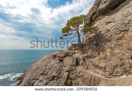 Seascape with rocks and tree