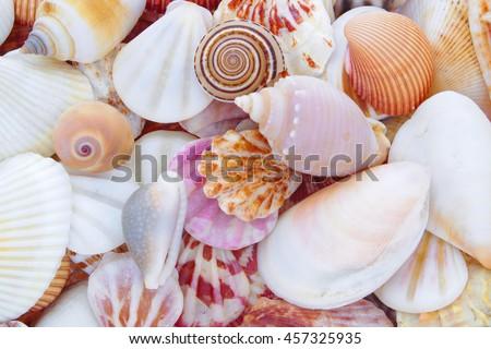 stock-photo-seashell-background-lots-of-