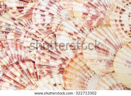 Seashell background, lots of scallop sea shells piled together - stock photo