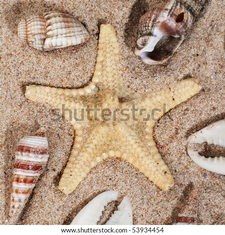 seashell background with various kinds of shells - stock photo