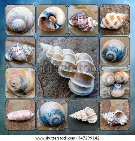 Seashell Collage - stock photo