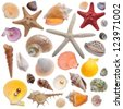 Seashell collection isolated on the white - stock photo