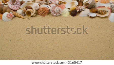Seashell Collection on Sandy Beach with Copy Space - stock photo