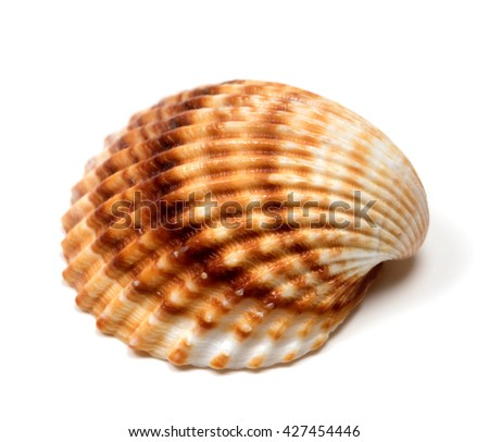 Seashell isolated on a white background - stock photo