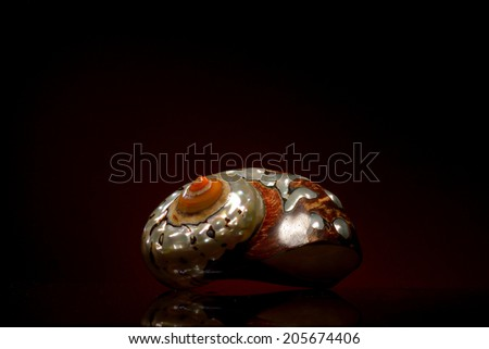 Seashell isolated on black background