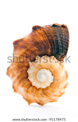 Seashell isolated on white - stock photo